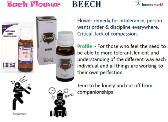 Bach flower remedy beech indication profile
