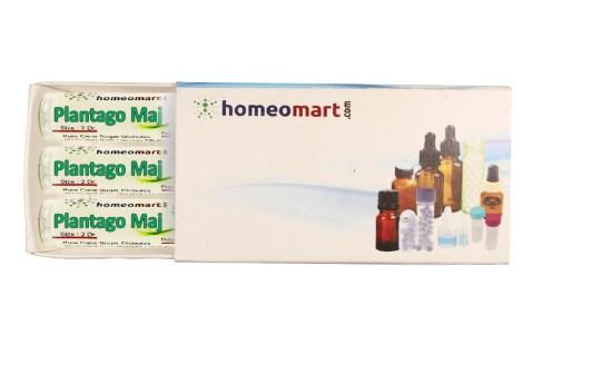 Plantago Major homeopathy pills