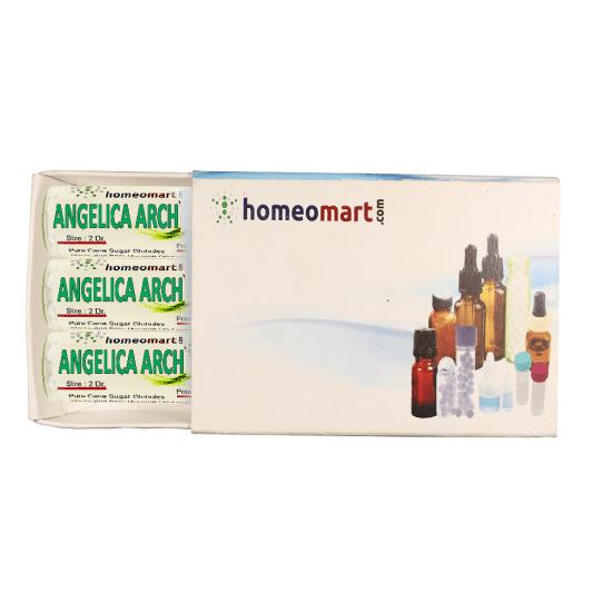 Angelica Archangelica Homeopathy 2 Dram Pellets 6C, 30C, 200C, 1M, 10M