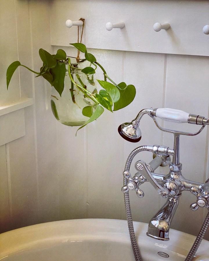 pothos in bathroom, home decor, easy house plants