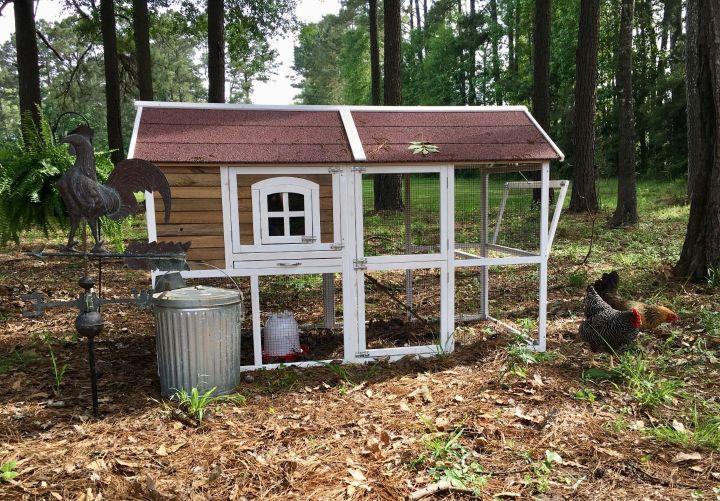 chicken coop, farm, chickens, backyard chickens, fresh eggs, organic eggs, yard eggs, homestead, self sufficient, homegrown