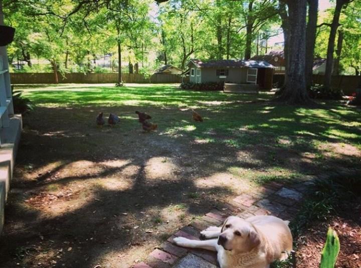 chicken coop, diy chicken coop, repurposed chicken coop, fresh eggs, organic eggs, backyard chickens, farm, farm life, homestead