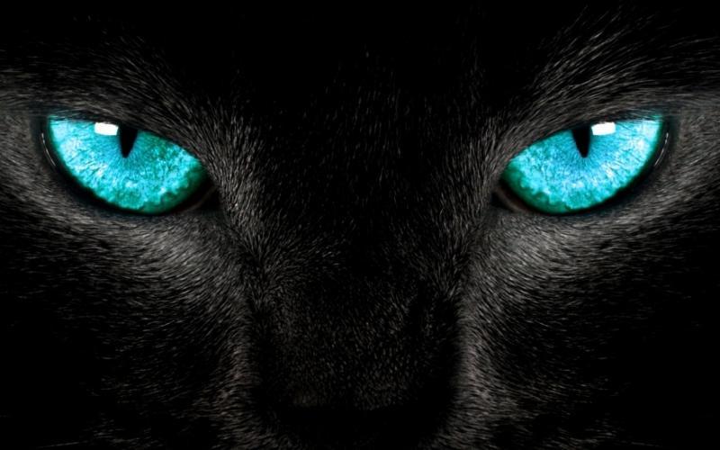 Необычная кличка для черной кошки
