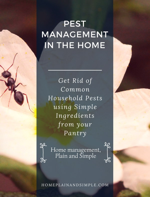 Get Rid of Common Household Pests using Simple Ingredients from your Pantry.