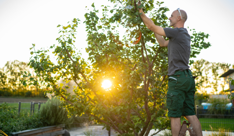 The WHY of pruning for trees, bushes and shrubs