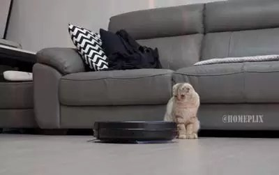 Roomba 805 Review | AeroForce Suction, iAdapt Navigation