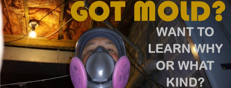 Learn about mold inspection