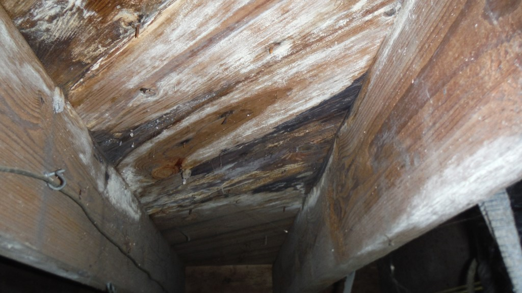 Hixson TN Mold Damage