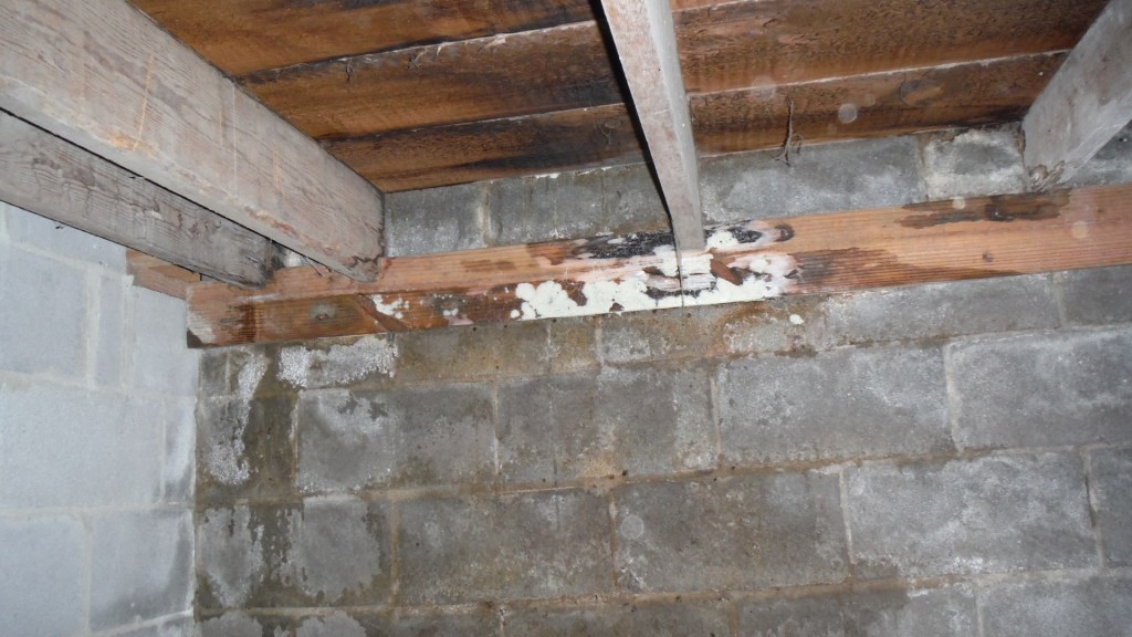 Mold Cause Collapse Ringgold GA