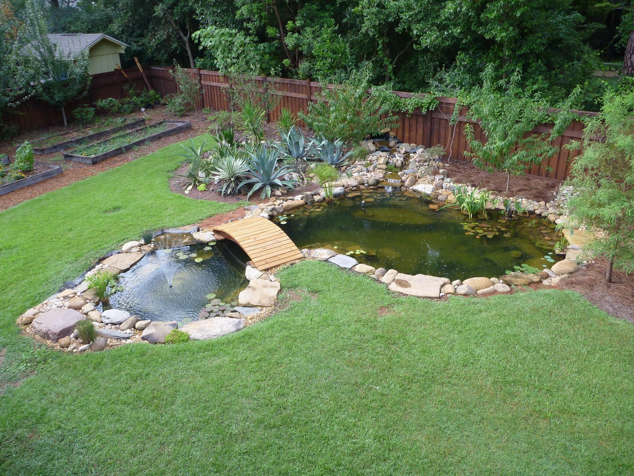 Welcome to My Blog! - Home Raised Aquatics & Plants on Small Backyard Pond  id=57229
