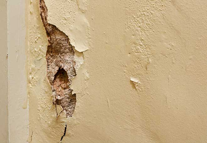 Dry Rot Decaying Interior Wall