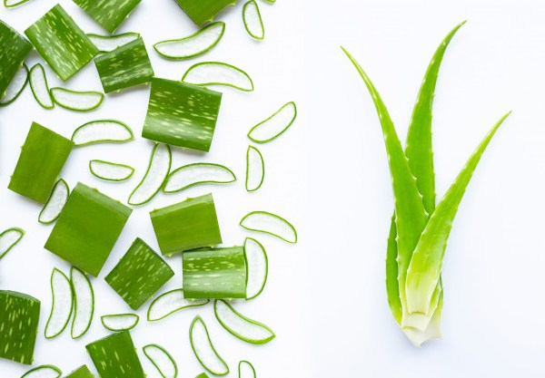 Type 2 Diabetes cure with Aloe Vera.. Do you know? How?