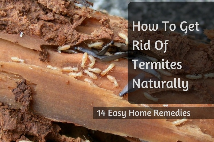 How To Get Rid Of Termites Naturally 14 Easy Home Remedies