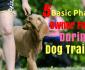 5-basic-phases-during-dog-training