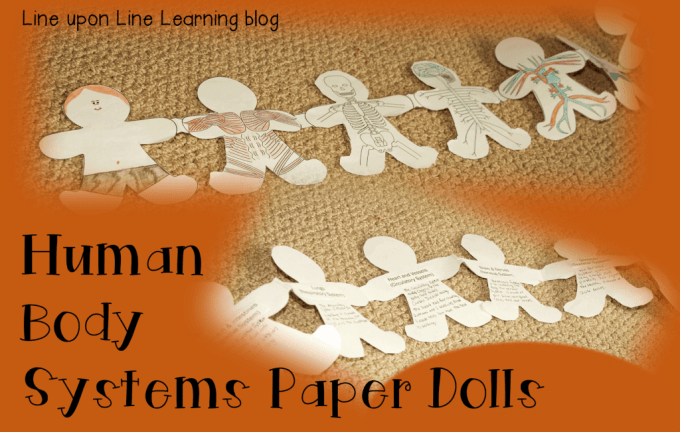 human body systems paper dolls