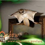 All About Flying Squirrels