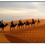 Biome: Desert