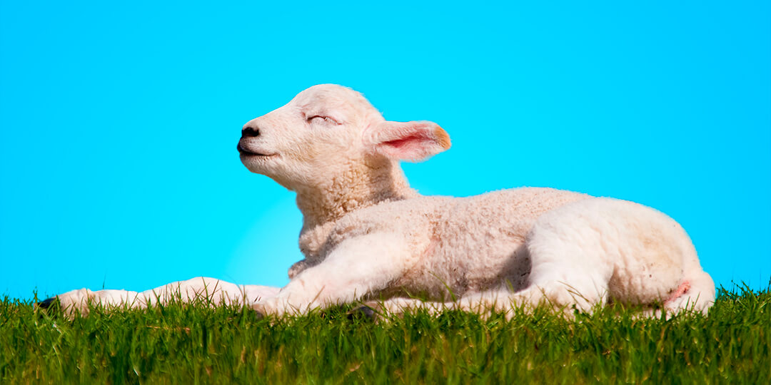 It's not about the bunny; it's about the Lamb.