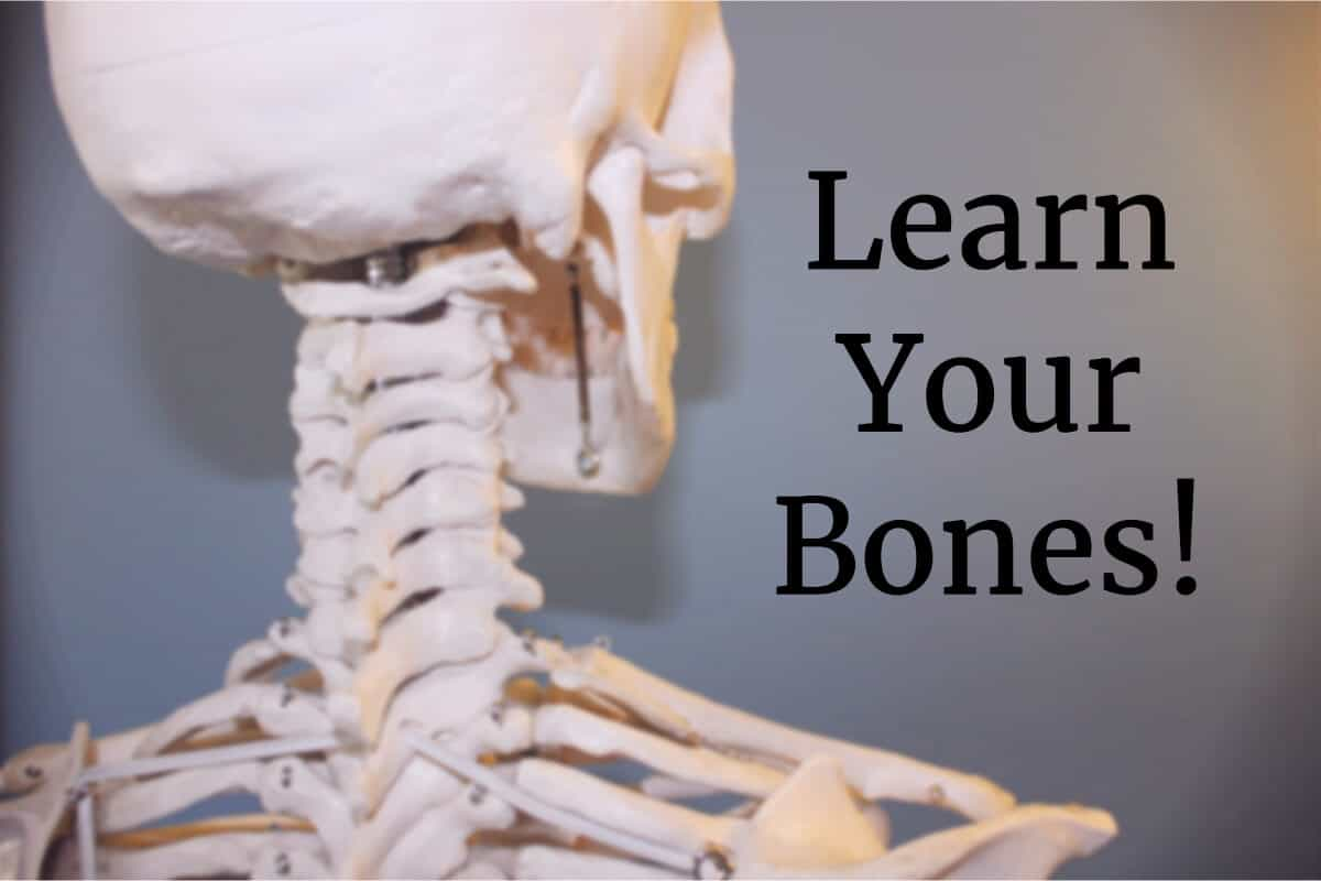 Learning The Bones Of The Human Body Ultimate Skeleton