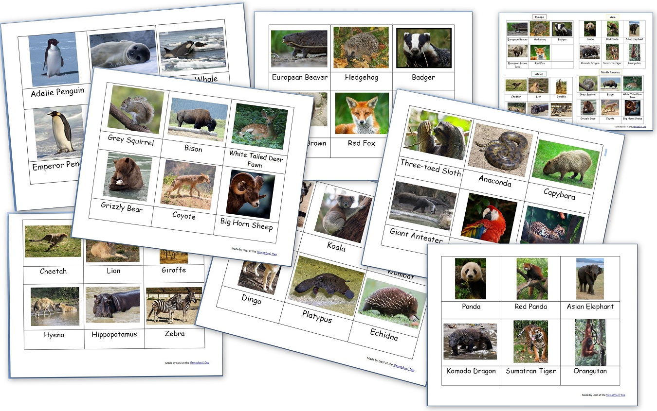 Animals Around The World World Animal Packet