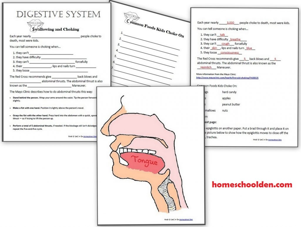 Glands The Human Body Worksheet