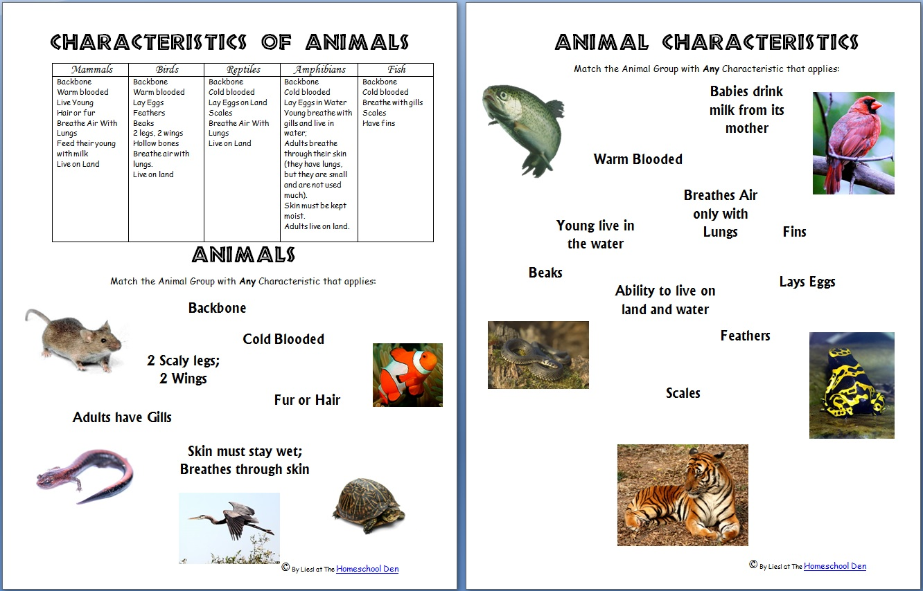 Worksheet Vertebrates Fish