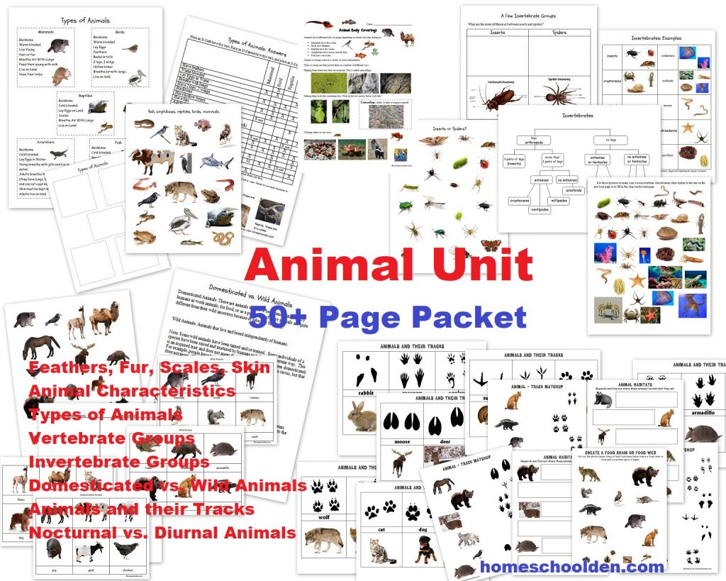 Animal Unit Vertebrate Invertebrate Animals Worksheet Packet 50 Pages