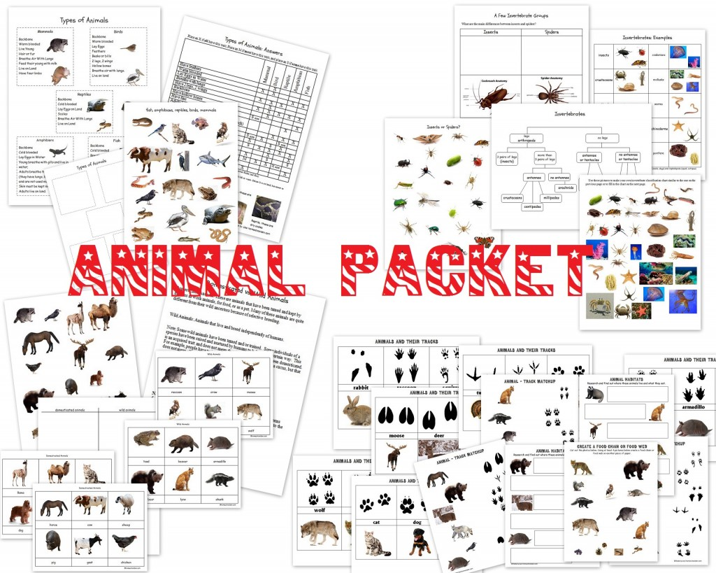 Animal Unit Vertebrate Invertebrate Animals Worksheet Packet 40 Pages