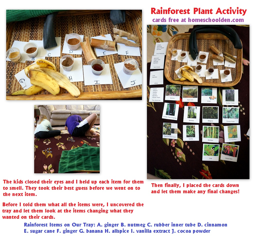 Plants Of The Rain Forest Activity With Free Rain Forest Plant Cards
