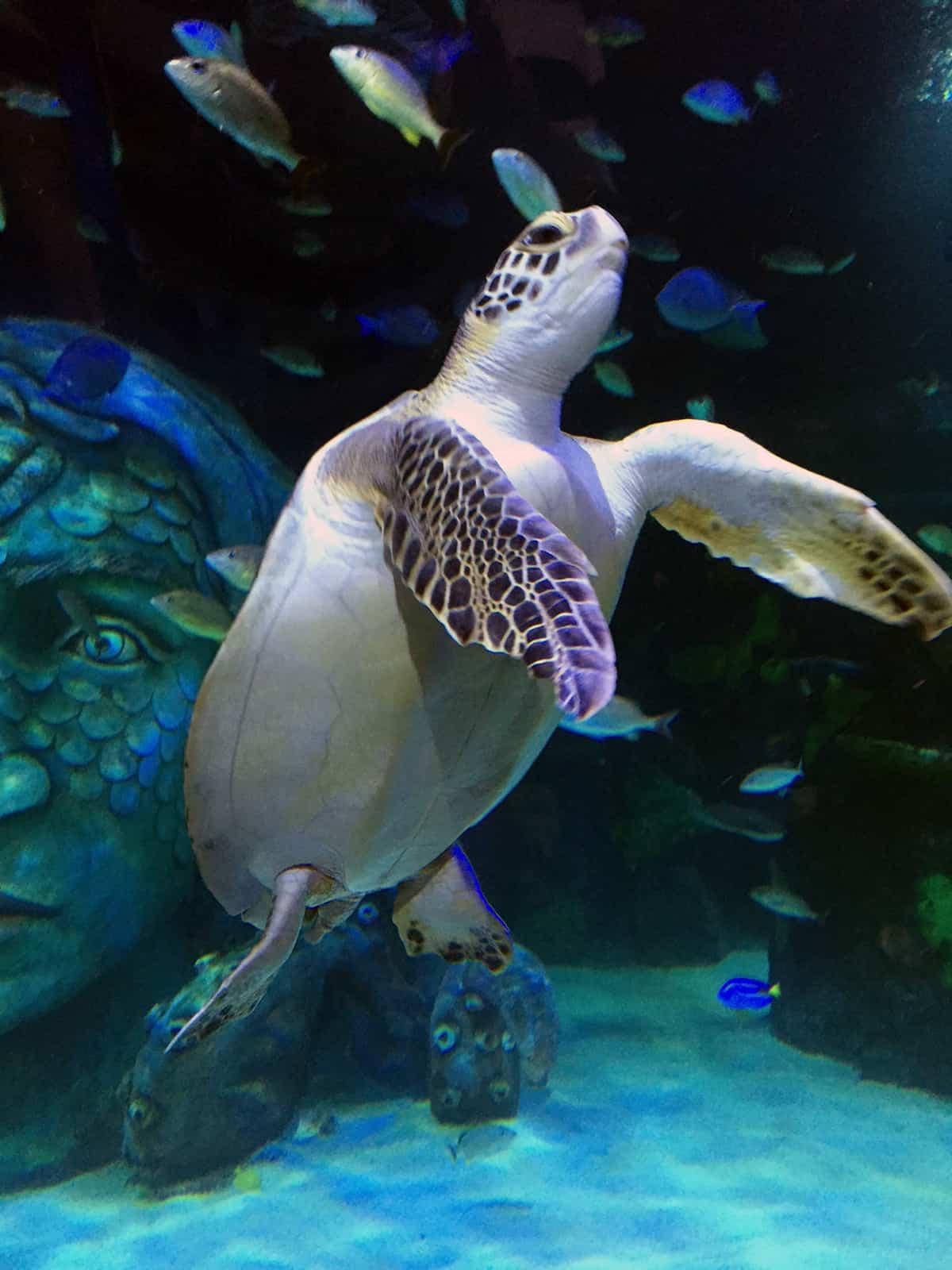 Homeschool Week At Sea Life Michigan Aquarium Feb 22 26