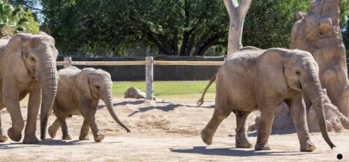 Zoo Virtual Field Trips