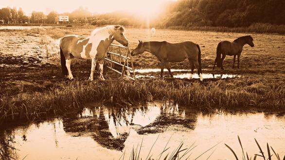 horse pond summer