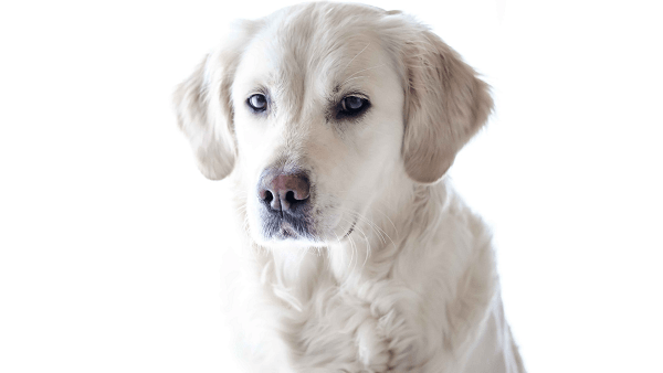 Secrets of Choosing the Right Dog Breed to be Your Friend