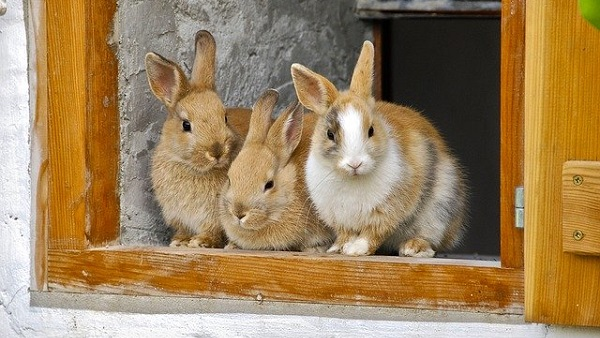 The Best Pet for Small Places! 5 Reasons to Choose a Rabbit as a Starter Pet
