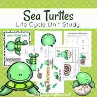 Preschool Sea Turtle Life Cycle Unit Study
