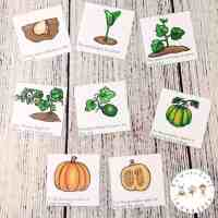 Preschool Life Cycle of a Pumpkin Printable Pack