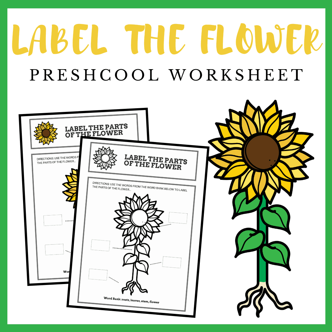 Free Printable Parts Of A Flower Preschool Worksheet