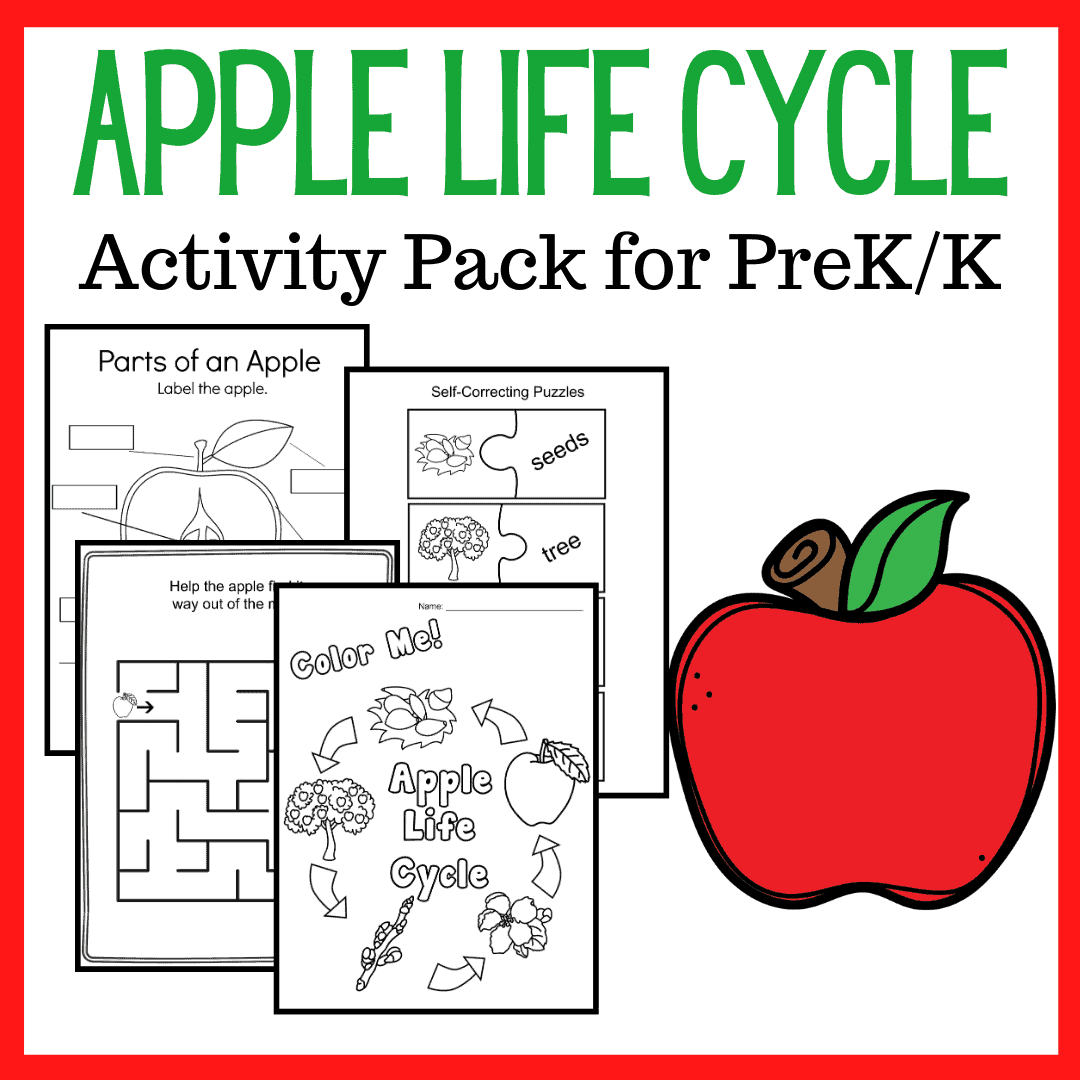 Apple Life Cycle Printable For Preschoolers