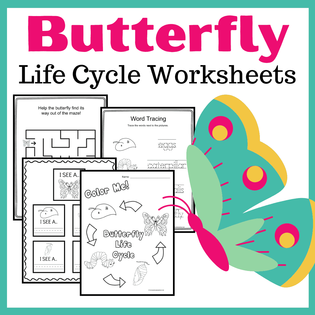 Study The Life Cycle Of A Butterfly For Kids