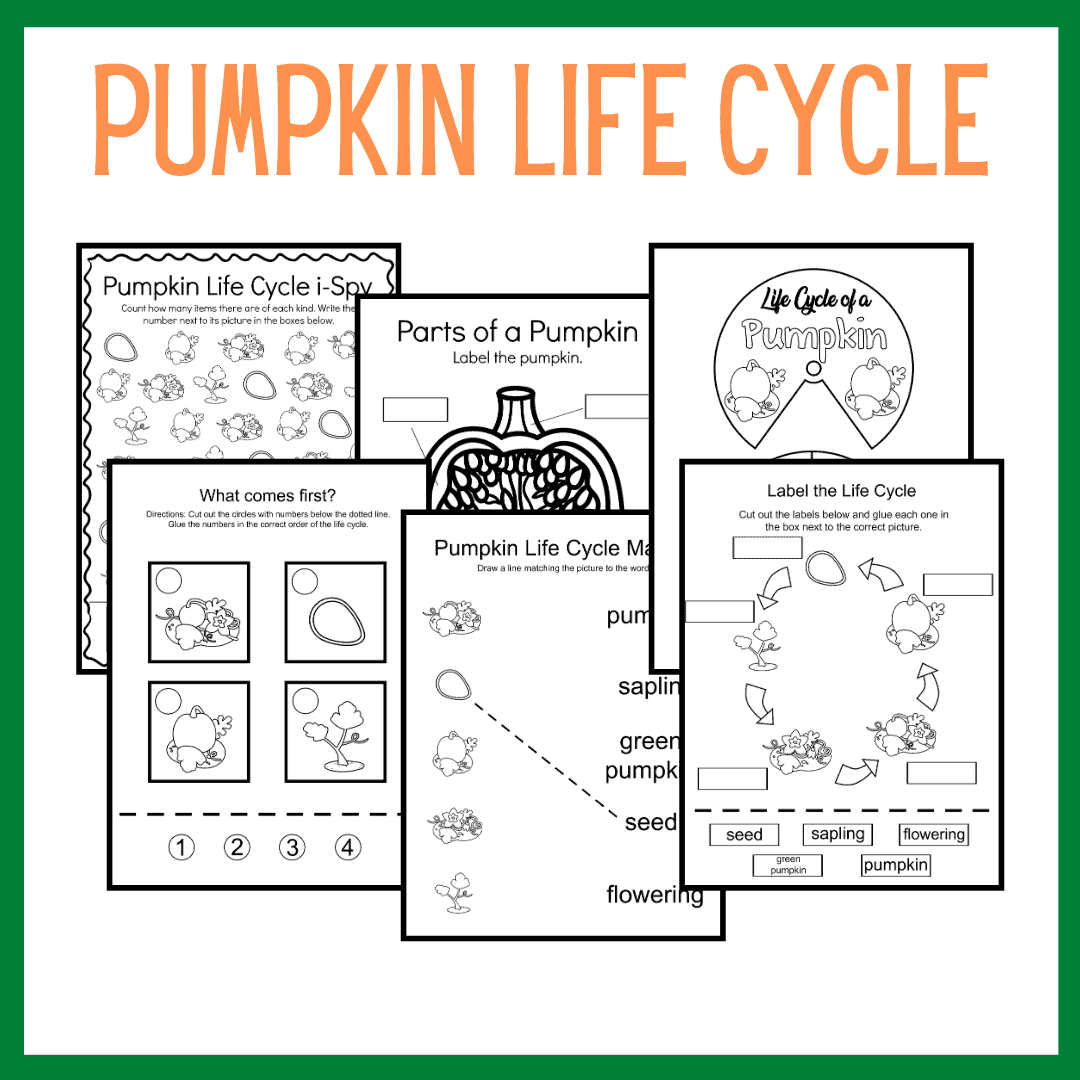 Printable Pumpkin Life Cycle Activities For Preschool