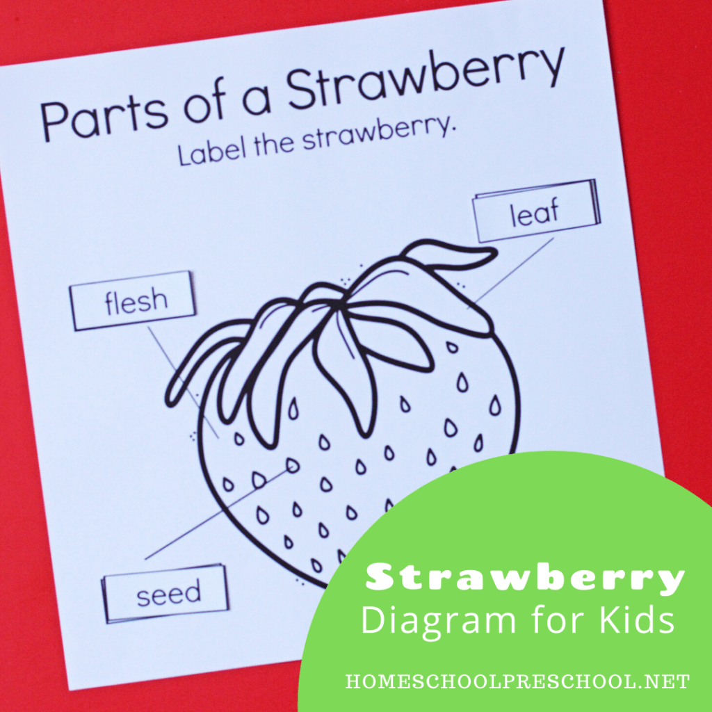 Parts Of A Strawberry Worksheet