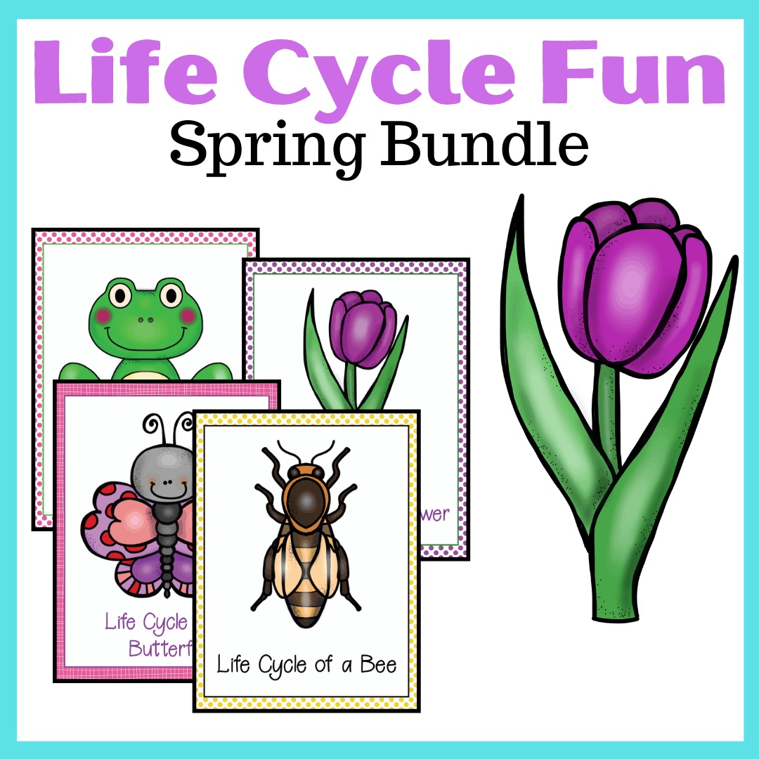 Spring Life Cycle Worksheets For Preschoolers