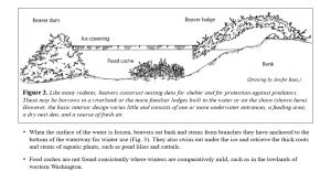 beaver-lodge