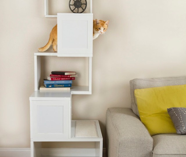 Sebastian Contemporary Cat Furniture Made Of Wood In White Painted Scheme Featuring Bookcase Decorated Aside From