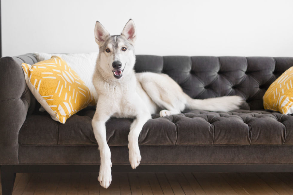 Wonderful Best Fabric Couches For Dogs Homesfeed
