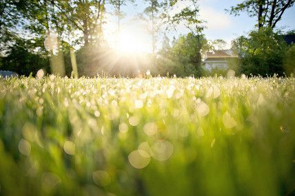Summer Tips: Landscaping and Curb Appeal