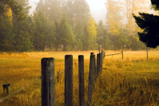 Property lines and a shared fence can cause problems with neighbors.