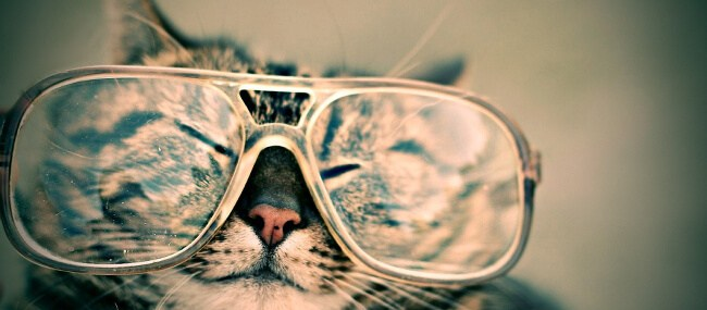 Being an e-PRO is more than funny cat pictures.