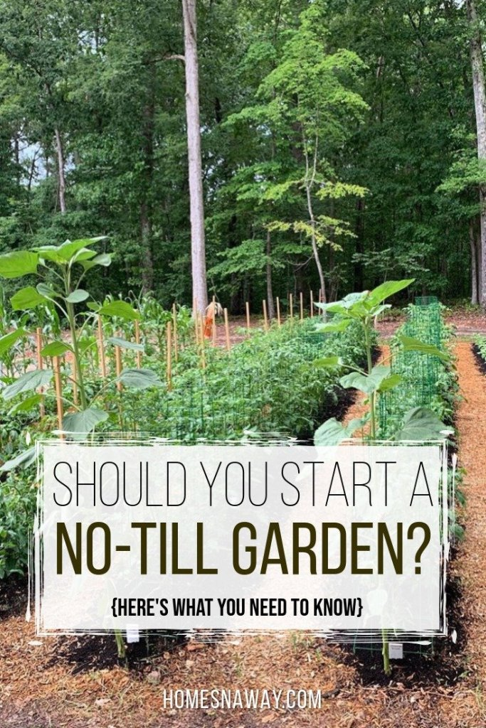 Should You Start A No-Till Garden?