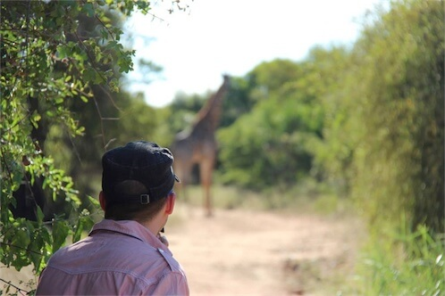Safari-Giraffe-South Africa
